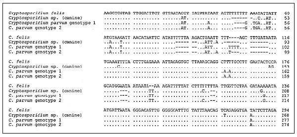 Alignment of the Cryptosporidium small subunit ribosomal DNA (SSU-rRNA) diagnostic fragments obtained with the CPBDIAGF/CPBDIAGR polymerase chain reaction primer pair for the four genotypes. Only the first 300 columns of the alignment are shown, as the remaining columns were identical for all genotypes. Gaps are shown with dashes (-), and bases identical to the base in the first row (C. felis) are shown with dots (.). Numbers to the right of the alignment show sequence positions for each genotyp