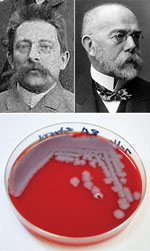 Top left: Julius Richard Petri, inventor of the Petri dish, »1888. Unknown photographer, from file Gruppenaufnahme von Bakteriologischen Kursen im RKI um 1888-A.jpg, Public Domain, https://commons.wikimedia.org/w/index.php?curid=31684326. Top right: Robert Koch. Unknown photographer, from the National Institutes of Health, US Department of Health and Human Services. Bottom: Petri dish showing Bacillus anthracis bacterial colonies grown on sheep's blood agar for 24 hours. Photograph, Centers for Disease Control and Prevention/Megan Mathias and J. Todd Parker, 2009