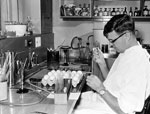 Thumbnail of Frank Fenner at the John Curtin School of Medical Research, Canberra, Australia, inoculating embryonating eggs with myxoma virus, 1950. Used with permission of the John Curtin School of Medical Research.