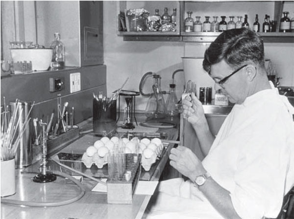 Frank Fenner at the John Curtin School of Medical Research, Canberra, Australia, inoculating embryonating eggs with myxoma virus, 1950. Used with permission of the John Curtin School of Medical Research.
