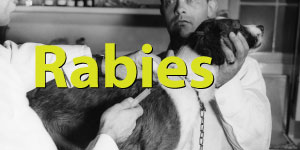 Rabies Spotlight