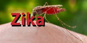 Zika Spotlight